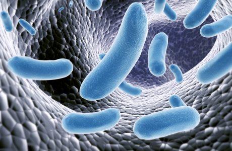 מי הם חיידקי המעיים? וכיצד להשפיע עליהם? +קוד קופון daytwo